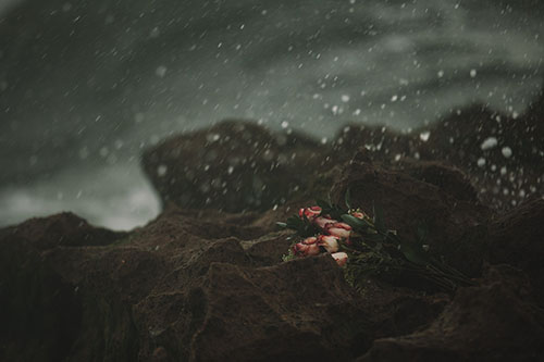 Roses on rocks on a rainy day