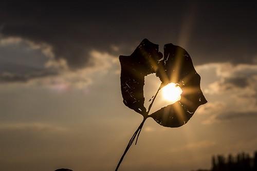 Sun rays breaking through a broken leaf