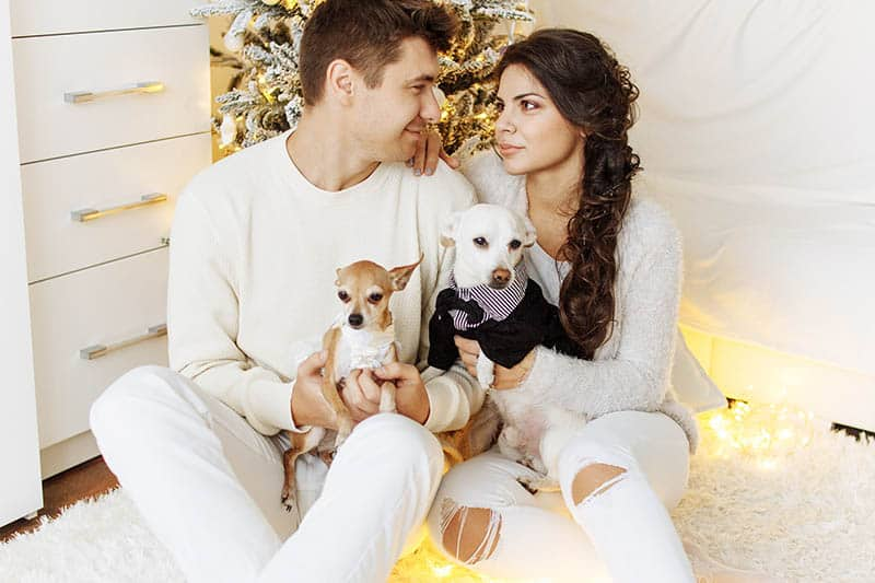Couple sitting beside Christmas tree holding puppies