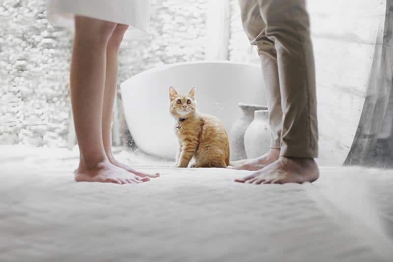 cat sits between the legs of man and woman