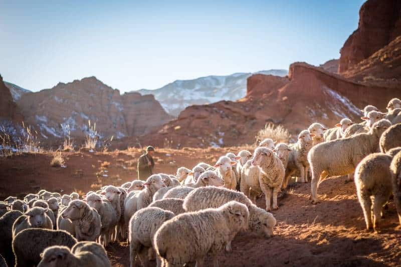 photo of herd of sheep in mountain