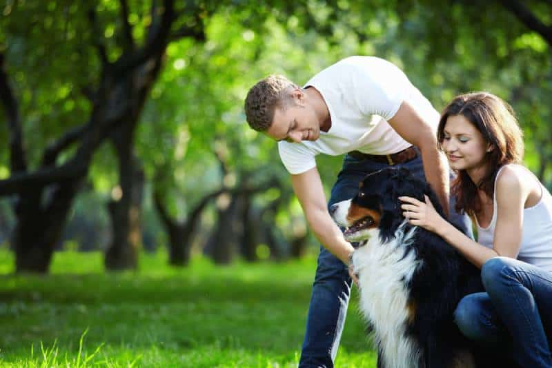 young couple walking dog in the park