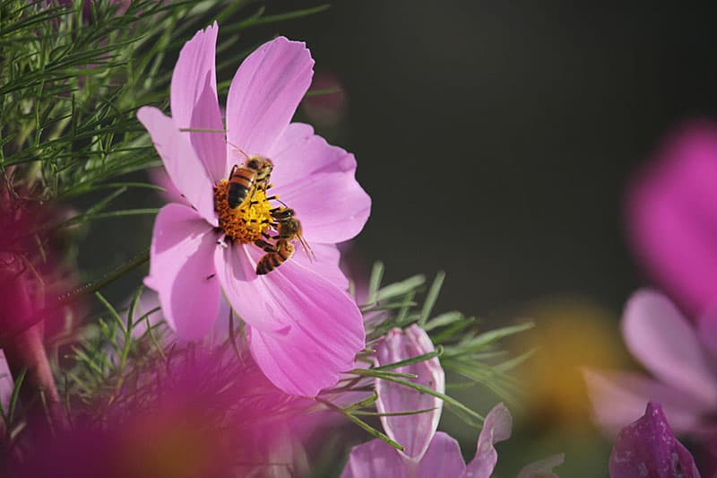 little bee on the purple flower