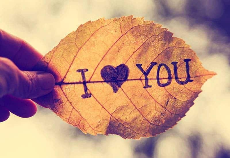 i love you sign on leaf