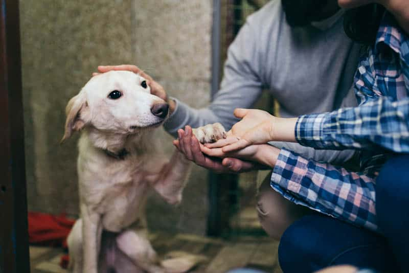 man and woman taking care of dog