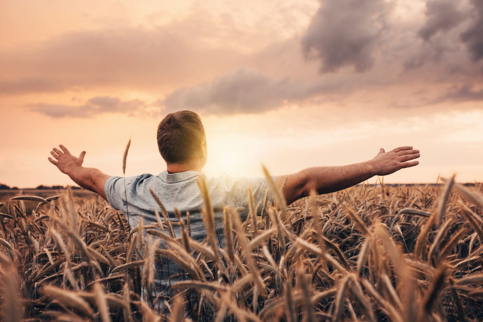 a man in a wheat field enjoys the sunset