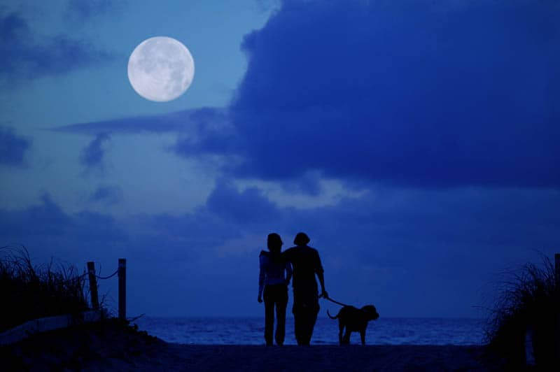 silhouette of couple with dog looking on moon