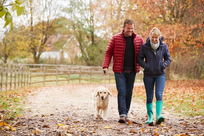 older couple walking with a golden retriever