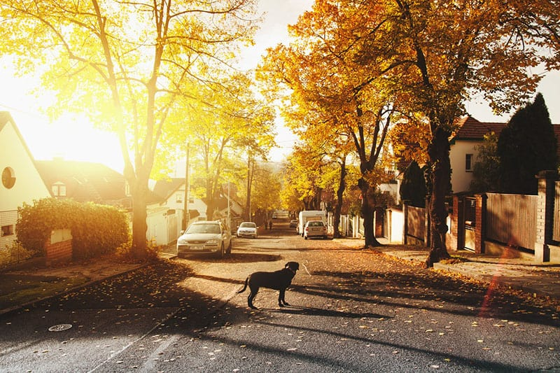 dog on concrete road with trees and few cars