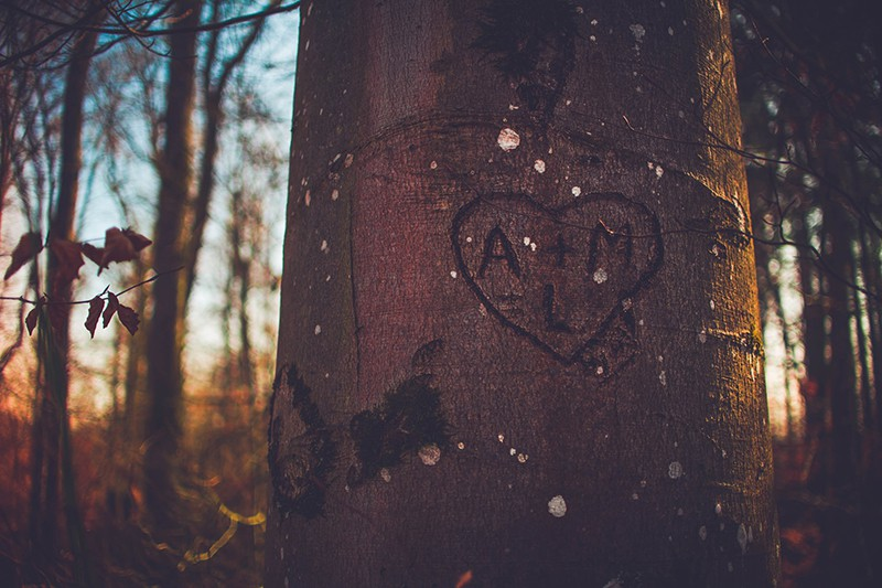 A+M carved on the tree in the wood