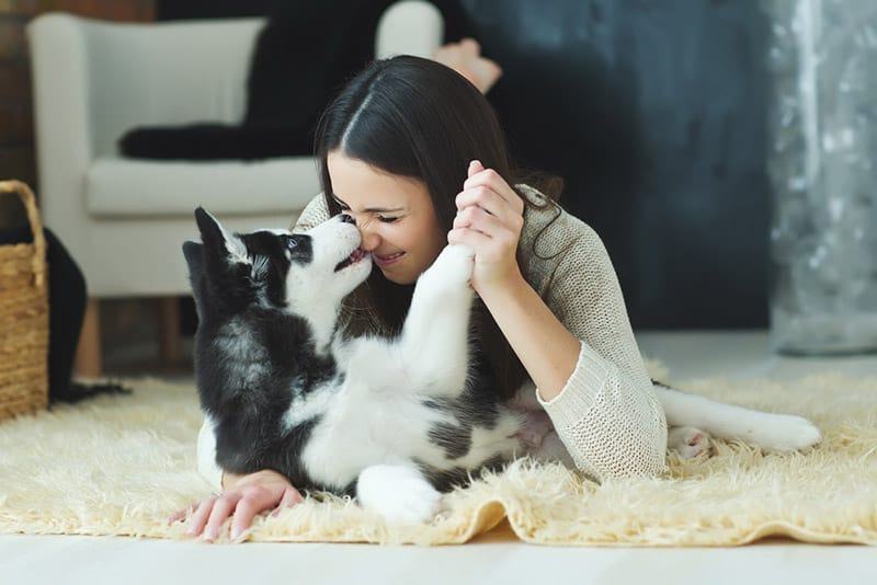 Woman playing with pet husky on the floor