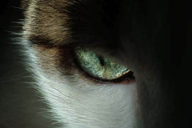 blue and white cats eye on a close up photography