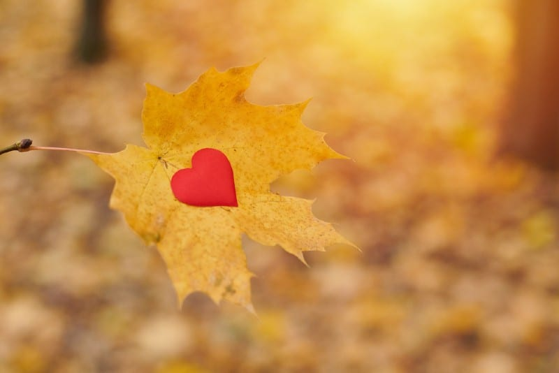 Red heart on a yellow maple leaf