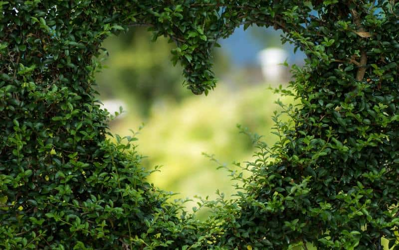 Heart shape made of tree leaf durong daytime