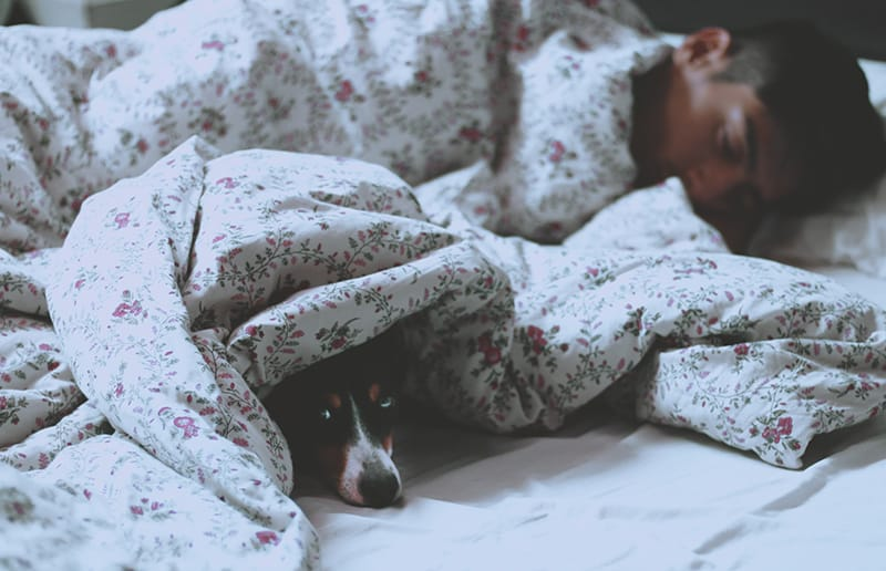 man lying on bed beside covered dog