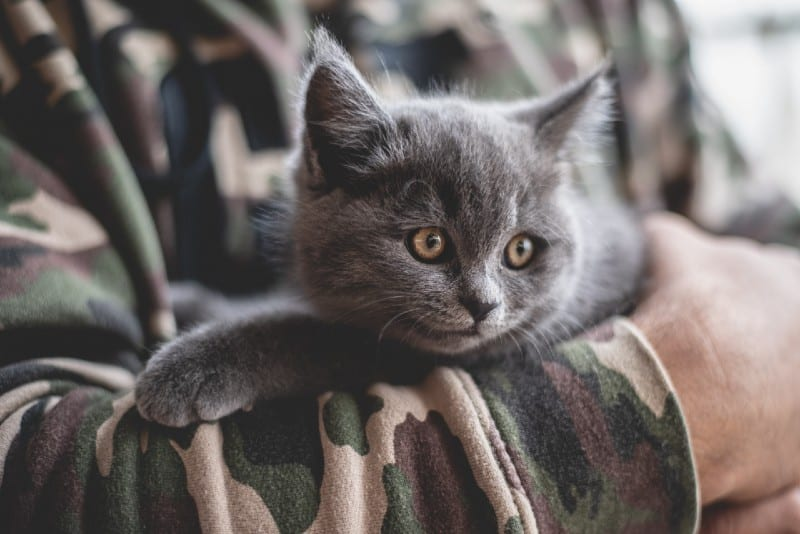 person holding gray kitten during daytime