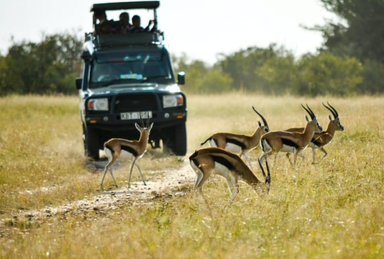 black vehicle running near the antelope during daytime