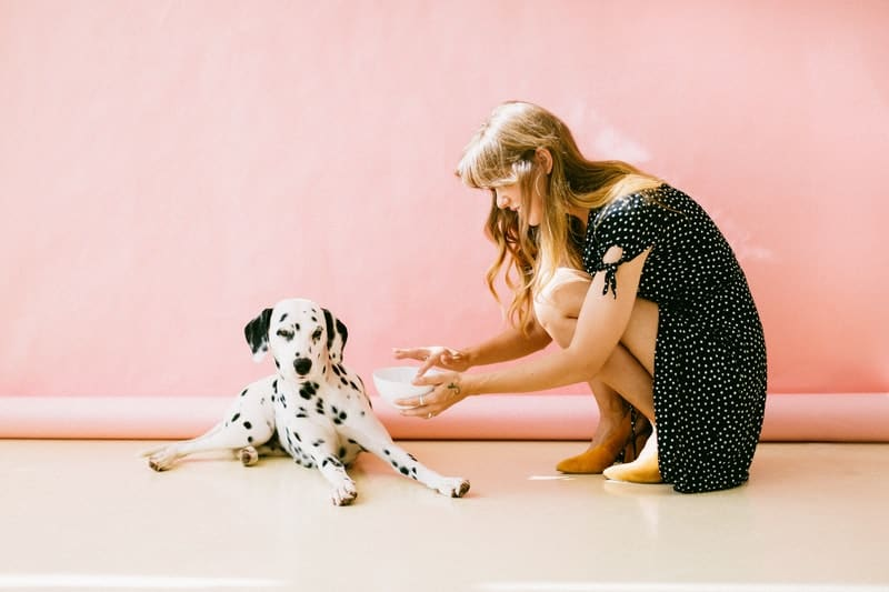 white and black dalmatian fed by a woman in polka dot dress