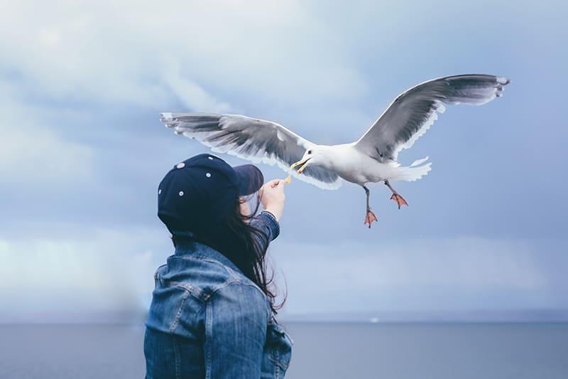 woman feeding flying seagull during daytime