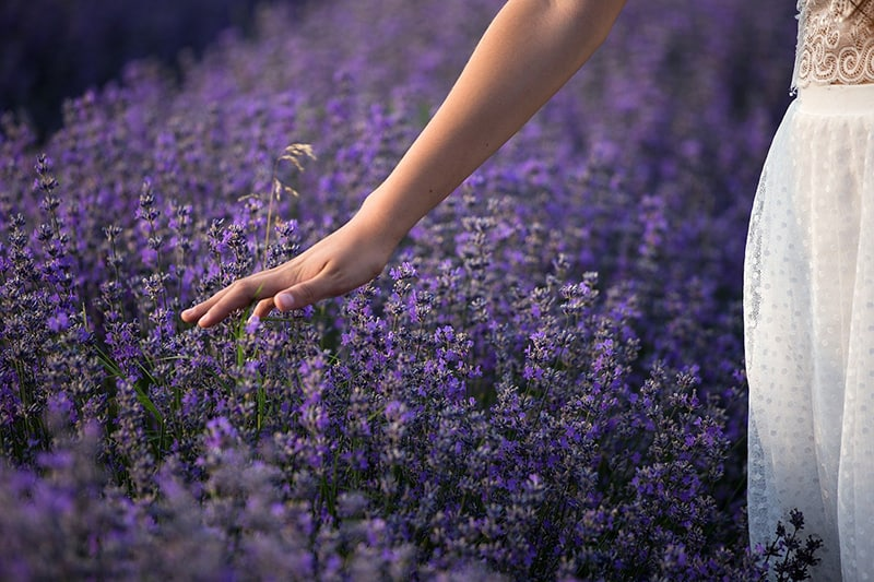 woman touching lavender flowers while standing in field
