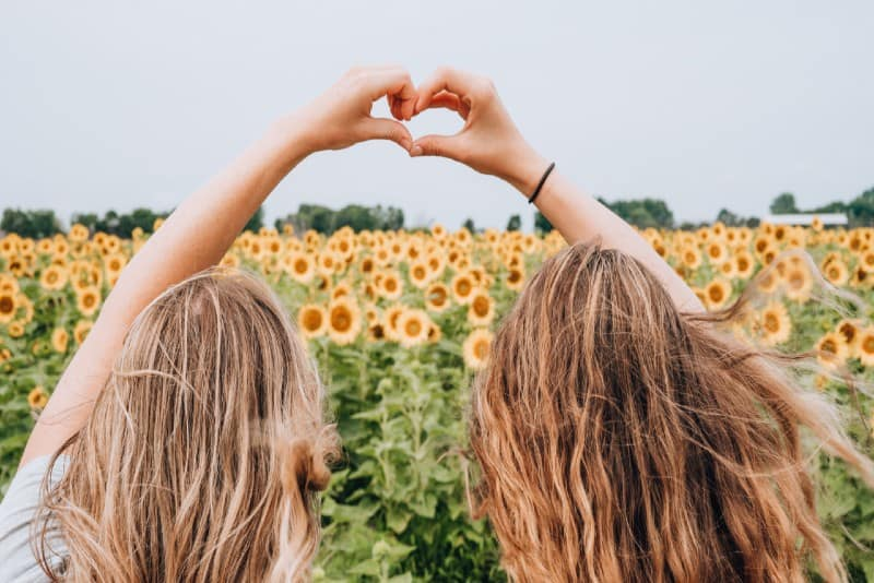 women forming heart-shape using hands near sunflower field