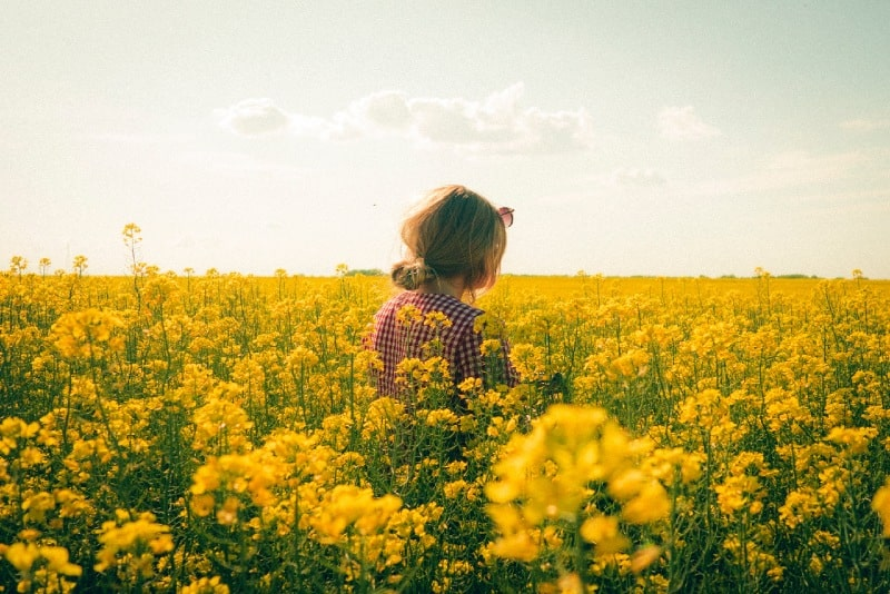 woman standing on yellow flower field