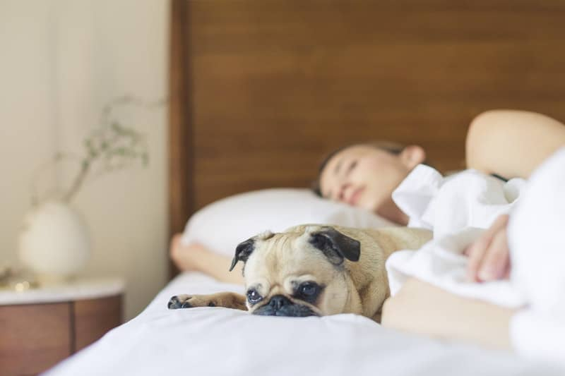cute dog near woman in bed sleeping with wooden bed headboard