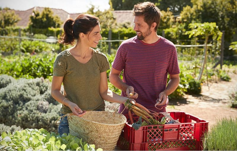 man and woman harvesting vegetables in a community garden