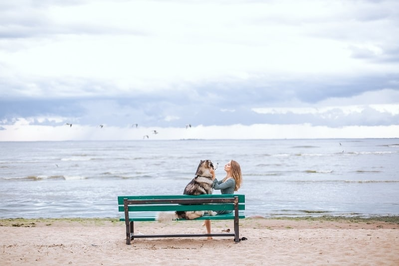 woman petting dog while sitting on bench near sea
