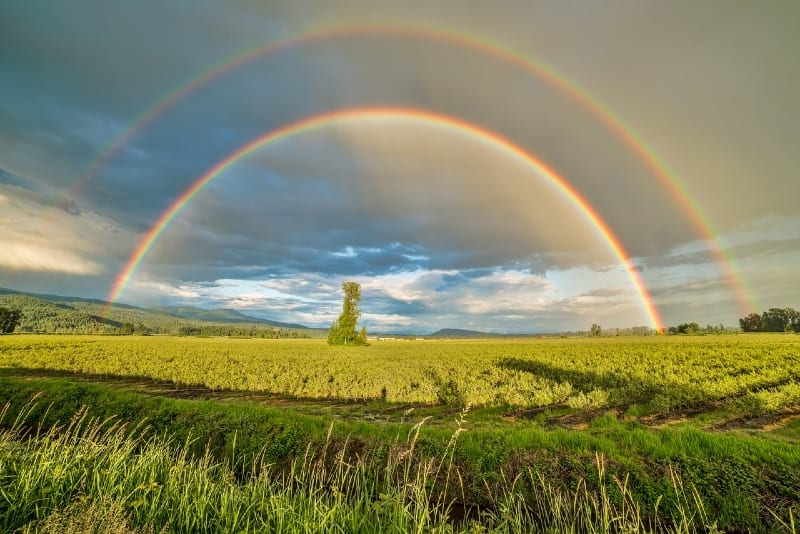 field under rainbow and cloudy skies