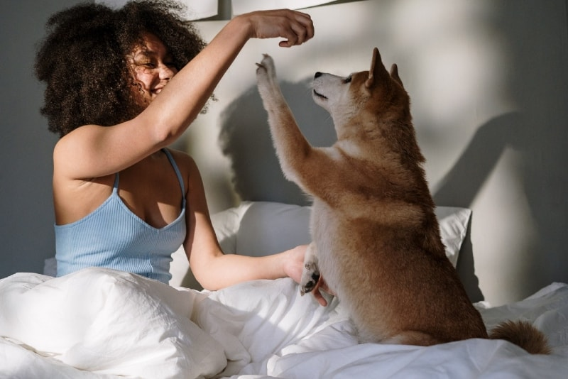 woman in blue top playing with dog in bed