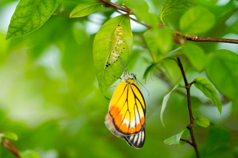 new born yellow butterfly on the tree with green leaves