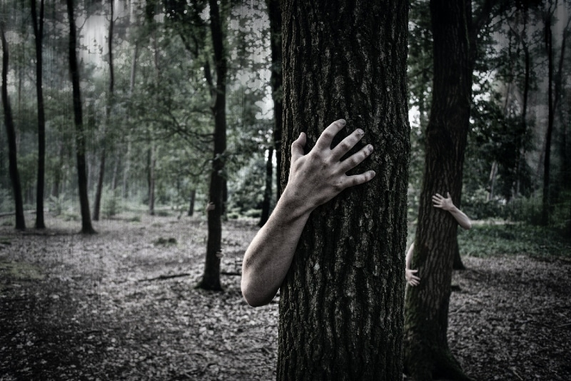 person hugging tree while standing in woods