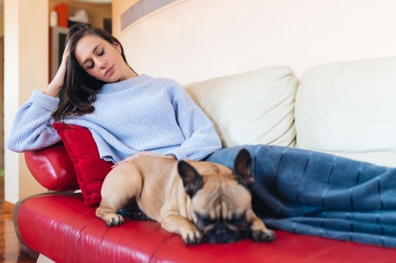 young woman petting on a french bulldog resting beside the woman on the sofa