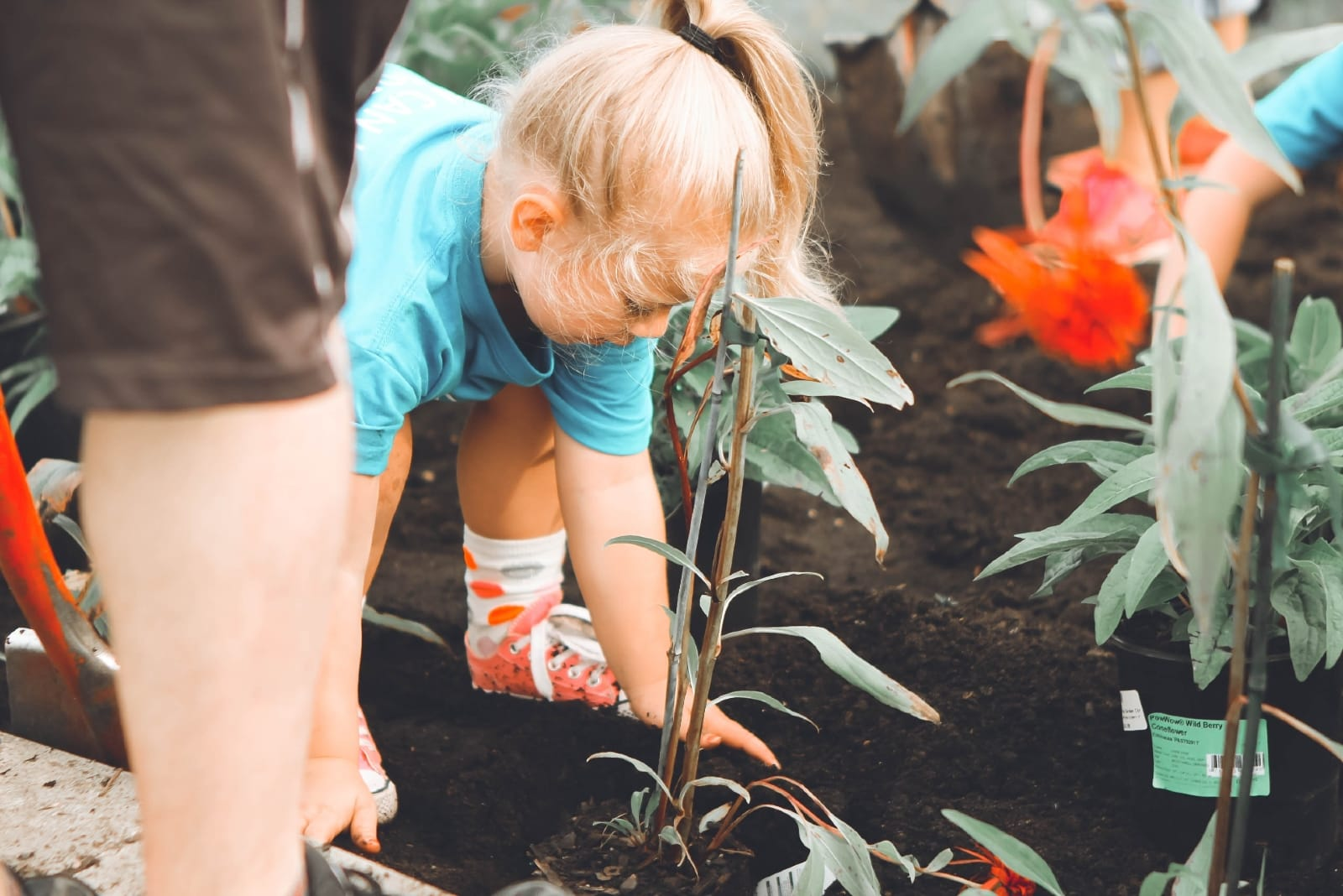 girl in blue t-shirt planting a plant