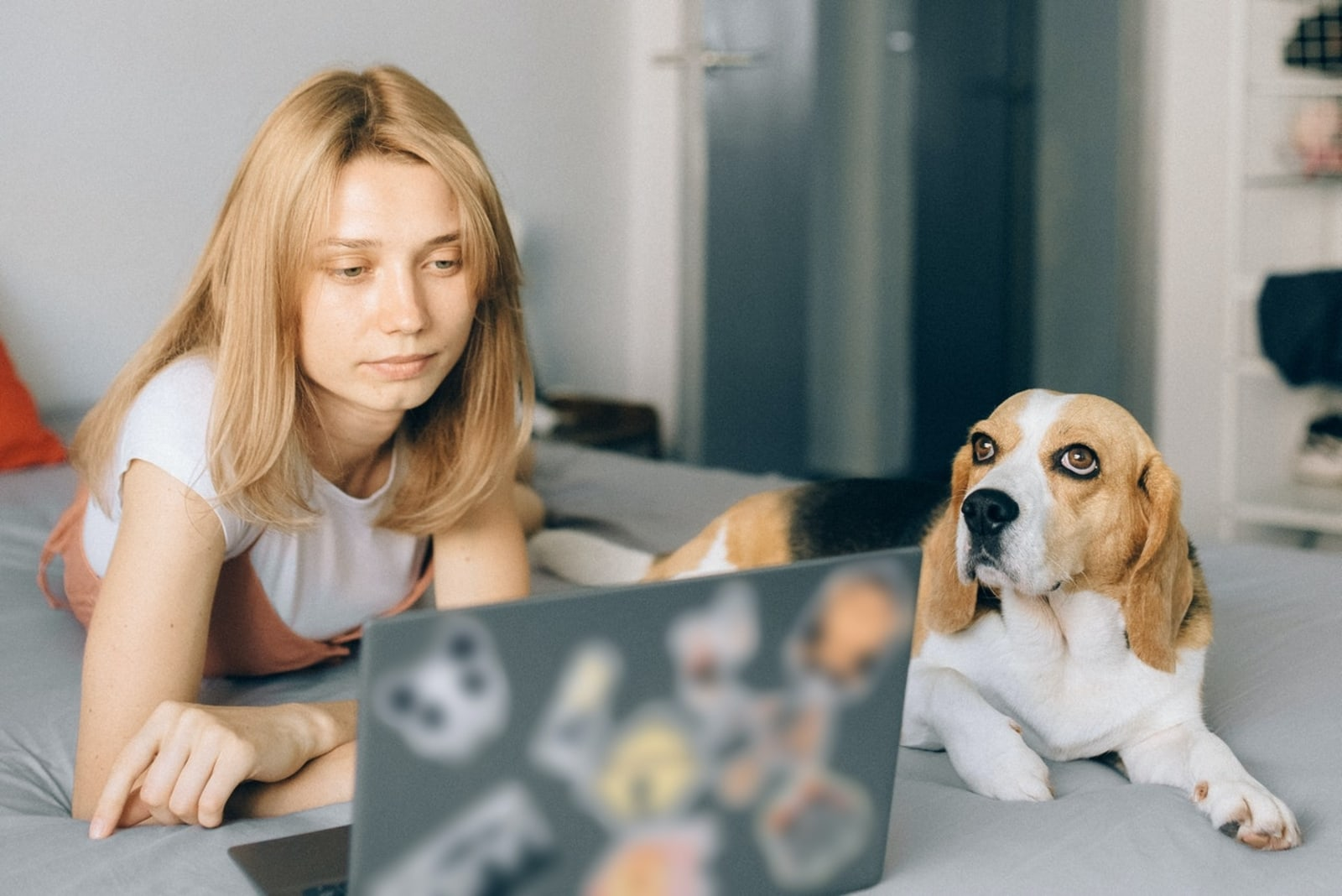 woman looking at laptop while laying on bed near dog